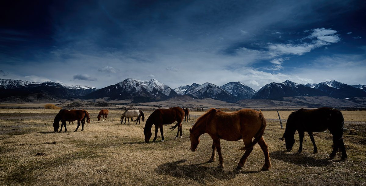 horses on the plain at yellowstone national park