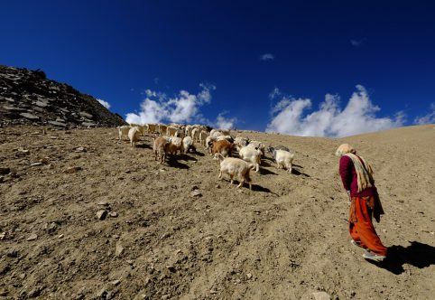 changpa goatherd at tso moriri lake © Hamish Scott-Brown