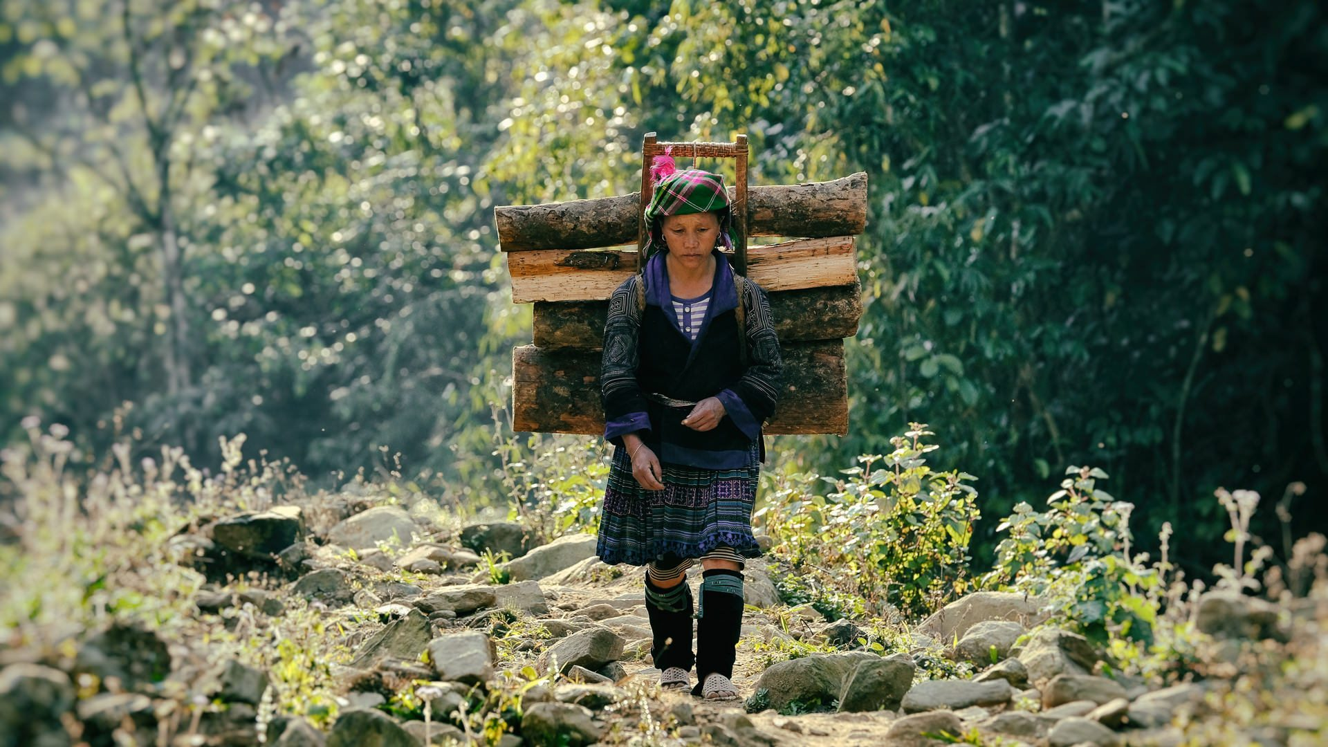a young hmong girl returns in dawn light form the forests collecting wood © Hamish Scott-Brown