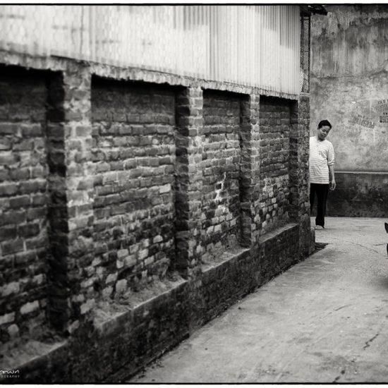 dog in an alleyway , vietnam