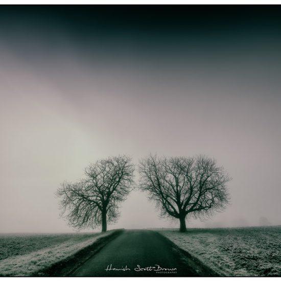 misty morning and trees flecknoe warwickshire © Hamish Scott-Brown