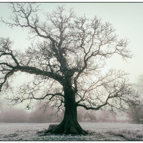 tree in mist at winter © Hamish Scott-Brown