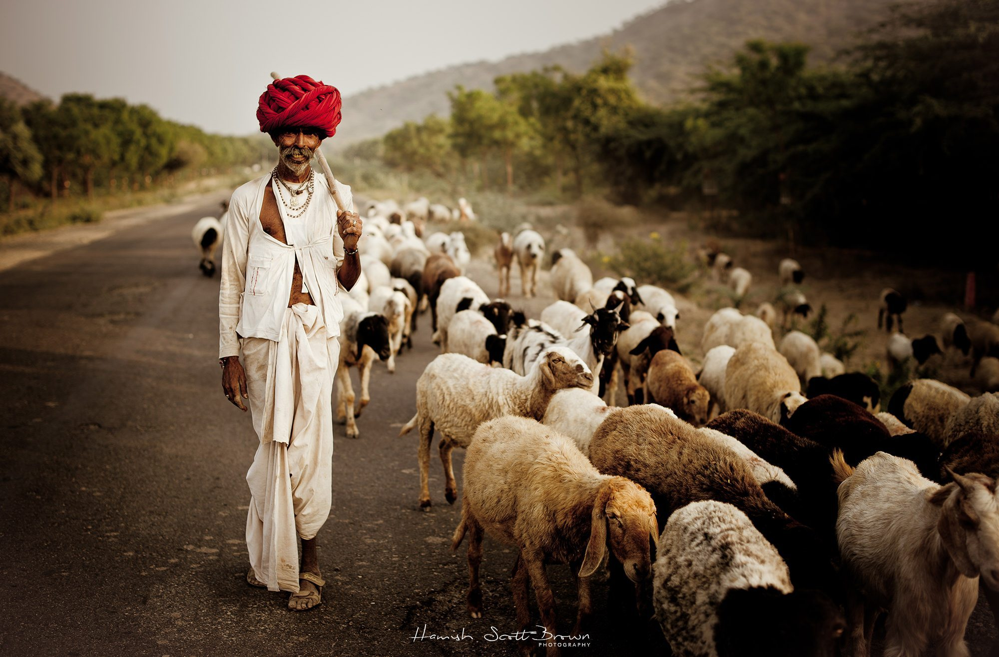 a farmer in rajasthan takes his flock home at sundown ©Hamish Scott-Brown