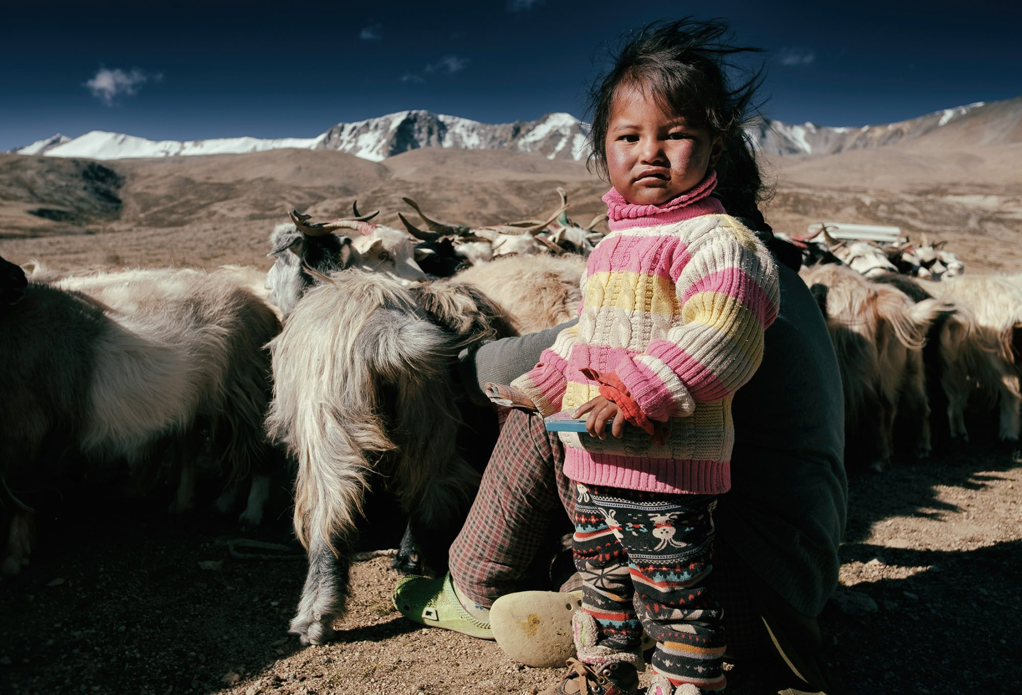 a young Changpa girl helps her mother milk the goats near Tso Moriri Lake, Ladakh © Hamish Scott-Brown