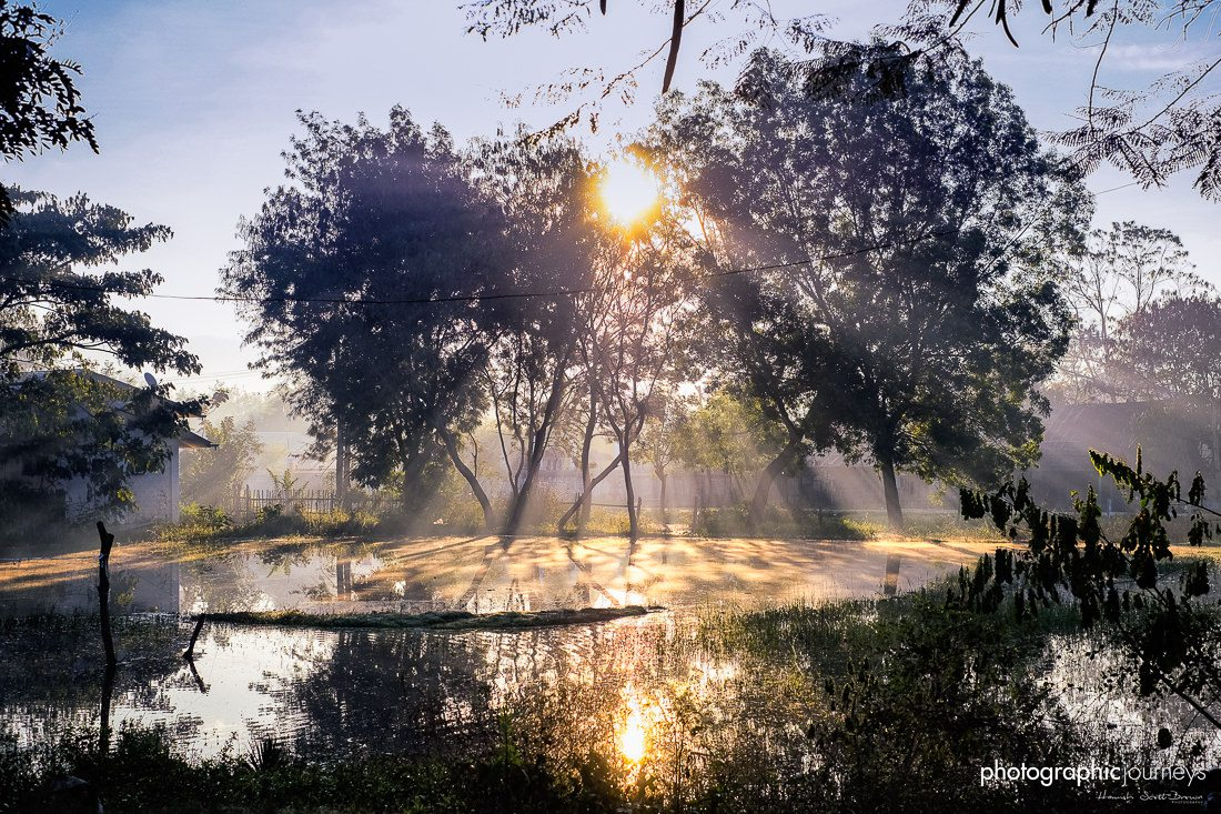 dawn sunlight through trees and pond in central myanmar © Hamish Scott-Brown