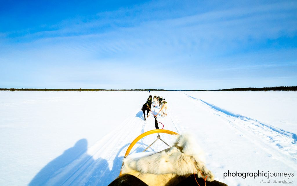 husky dogs pulling a sledge in arctic finland © Hamish Scott-Brown