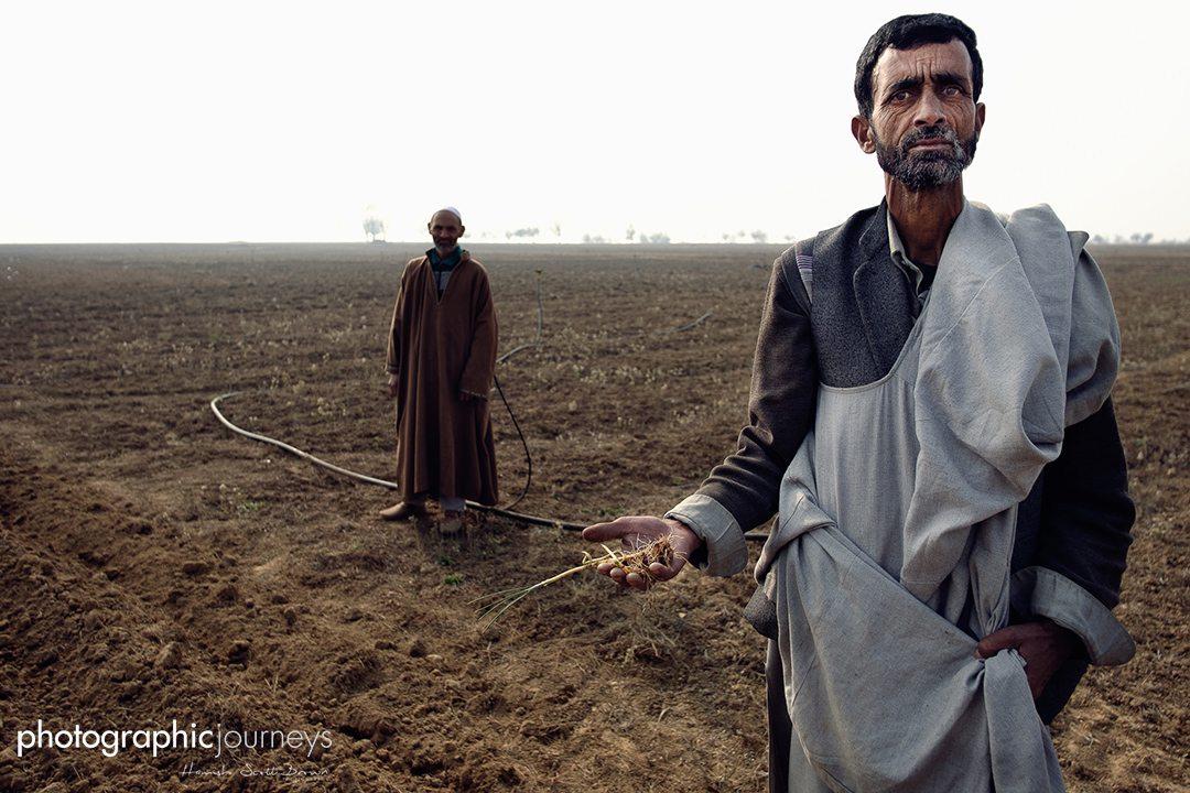 Drought ridden saffron fields of Pampore ©Hamish Scott-Brown