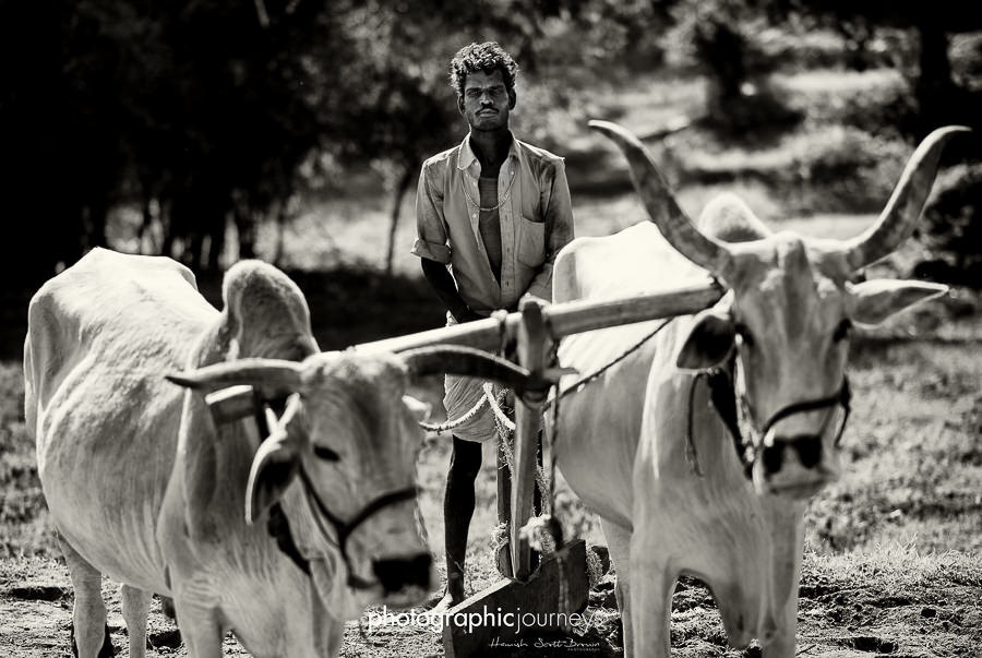 traditional ox plough in rural India © Hamish Scott-Brown